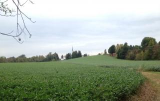 Smith & Sons farm