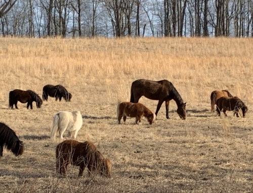 Press Release: Alliance Facilitates Low-Interest Loan for Land of Little Horses Expansion